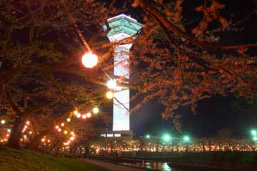 五稜郭タワー夜桜