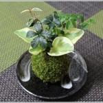 苔玉の作り方と育て方~意外に簡単にできる!