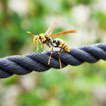 アシナガバチに刺されたらどんな症状が?処置方法、病院は必要?