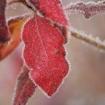 二十四節気の霜降とは、どんな意味?読み方や「候」の使い方は?